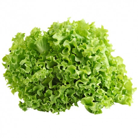 Lettuce Green Ice